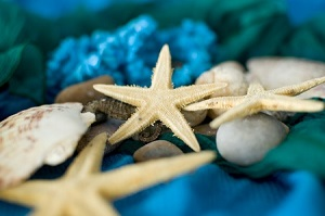 A Starfish and Clutter outtaspaceorganizing.com